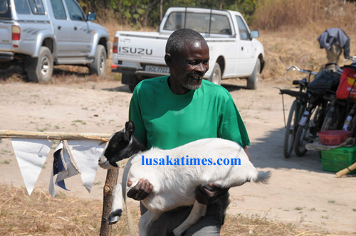 An unidentified man walks away with a goat he received from the Konkola Copper mines corporate social responsibility project in Mufulira.