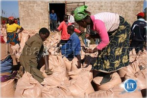 File: Peasant farmers sifting through their maize before selling the crop to the Food Reserve Agency