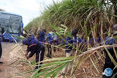 Some shareholders plucking sugar cane plants during the conducted tour of the Zambia sugar factory in Lusaka yesterday.
