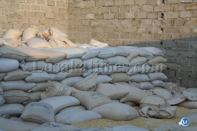 Thousands of bags of maize have continued to go to waste in the country. This picture was taken at Nangweshi area of Shangombo District in Western Province last week