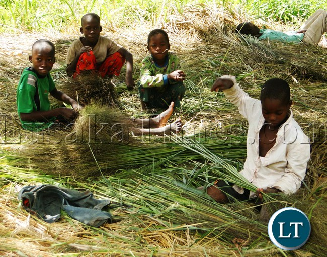 STEET Children prefer to collect and make brooms to see theirs meet instead of stealing and other vices in Kasama a way to spend their Good Friday
