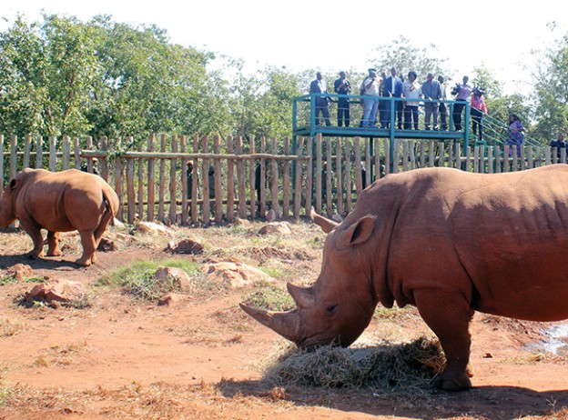 Rhinos at the new Lusaka Game park