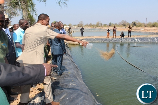 PRESIDENT Edgar Lungu feeds the fish in one of the ponds. This was during the official opening of Yalelo Fresh Zambian Fishing farming company at Kamimbi village in Siavonga district