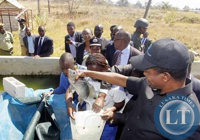 President Edgar Chagwa Lungu (right) holds a fish during the tour of Palabana Fisheries in Chongwe District on Wednesday, August 5,2015. PICTURE BY SALIM HENRY/STATE HOUSE © 2015