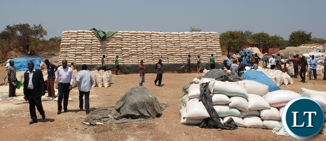 Out-going Acting Mbala District Commissioner, Felix Mungaila (in a black suit) after checking the purchasing of maize at Kamuswazi Satellite depot