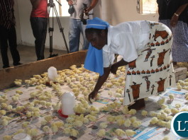 FDD President Edith Nawakwi has launched a Poultry Start-Up Grants project where she will donate over ten thousand (10000) chicks plus feed to twenty (20) organizations looking after orphans and vulnerable children in Northern Province.