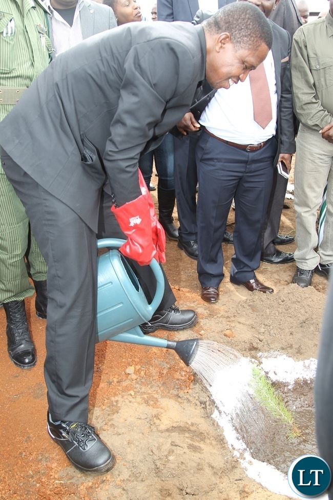 President Edgar Lungu watering a plant during the lunch of the forestly planting of the National tree exercise in Shiwangandu District