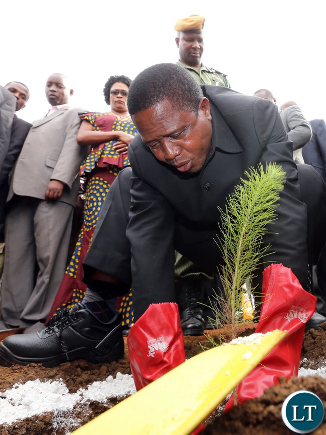 President Edgar Chagwa Lungu plants a tree after launching the ZAFFICO Shiwang'andu Forest plantation on Tuesday,December 15,2015 in Muchinga Province. PICTURE BY EDDIE MWANALEZA/STATE HOUSE ©2015