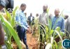 President Edgar Lungu and his entourage inspects the maize field which is critically hit by drought, will effect 2015/2016 harvest season today.
