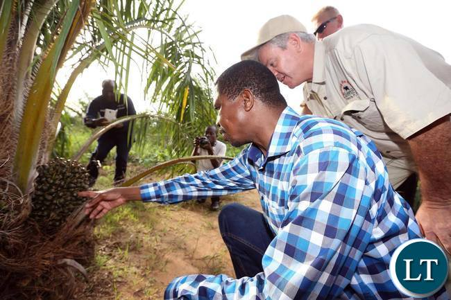 President Lungu visiting Zambia's first ever palm plantation. The plantation boasts of 2,800 hectares of palm plants, which when harvested will produce crude palm oil that is the basic ingredient in most vegetable oils on the market in Zambia.