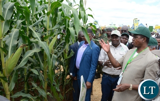 President Lungu looks the field of maize during the Agritech Expo 2016 in Chisamba Central Province