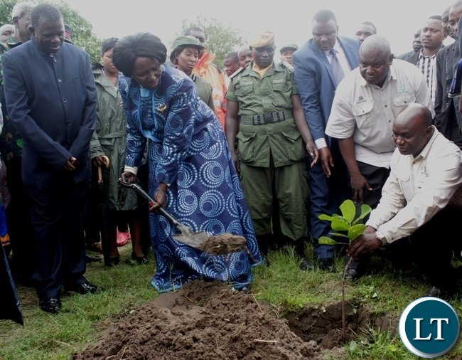 Vice President Inonge Mutukwa Wina (c) planting a cashew plant during the memorial service of her late father Mr. Simwinji Mutukwa in Sibumbu Village in Nalolo District, Western Province