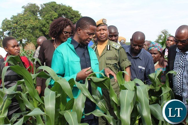 PRESIDENT Edgar Lungu inspects a field affected by Army Worms in Lundazi District on Saturday. PICTURE BY STEPHEN MUKOBEKO/ZANIS