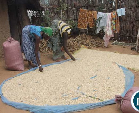Small scale farmers inspecting their harvest