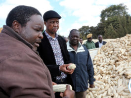 President Edgar Lungu chats with Mr Joseph Daka Maize Seed farmer of Mkushi farming Block during the Tours of Mkushi farms