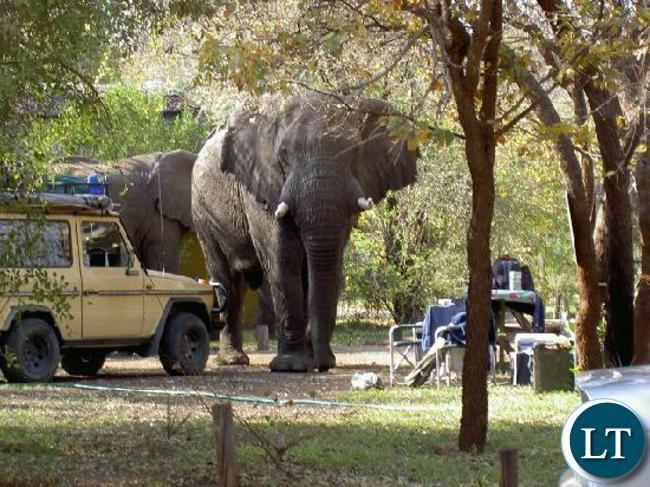 Elephants Pictured at Maramba River Lodge in Livingstone