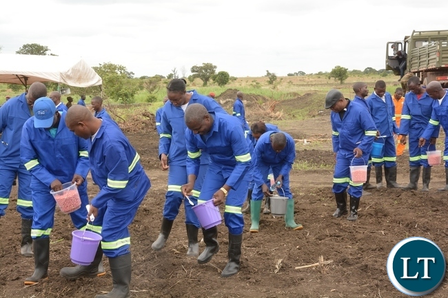 Zambia Army Personnel planting maize shortly after officially launching the 2017-2018 planting at 2ZR Makeni Farm