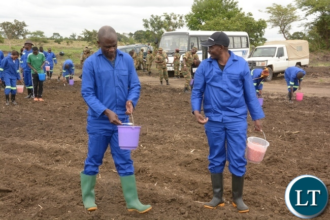 Zambia Army, Chief of Cooperatives Resettlement and Estates Brigadier General Charles Shapi and Director of Farm Col. Francis Ngunja planting maize whilst other Zambia Army Personnel follow suit shortly after officially launching the 2017-2018 planting at 2ZR Makeni Farm