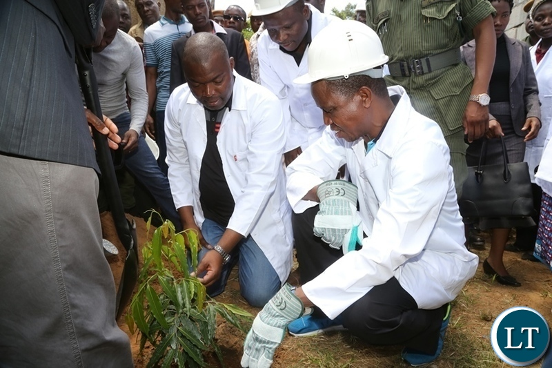 President Edgar Lungu planting a plant whilst Lusaka Province Minister Bowman Lusambo looks on shortly after the Presidential fundraising walk on the completion of the Multi-Purpose Hall at RCZ Kamwala Congregation