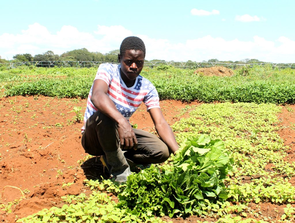 Happy Lingwe, the youngest organic vegetable farmer in Chongwe's Chikanchila village