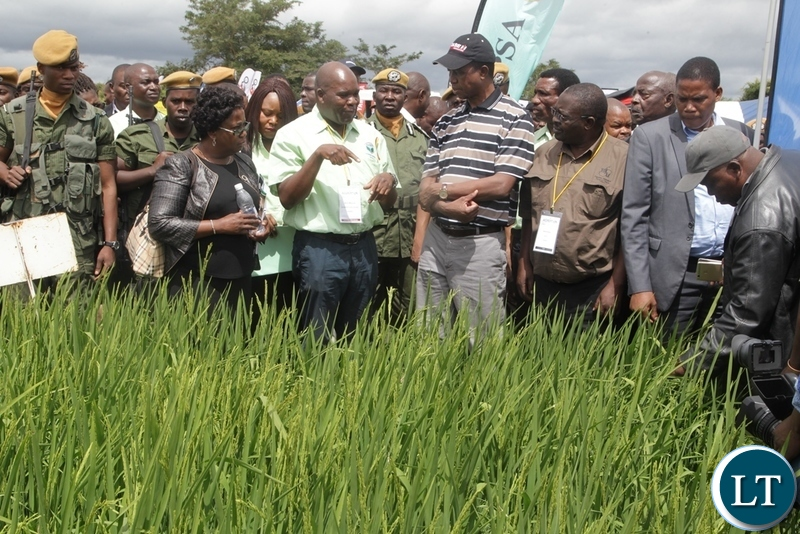 President EdgarLungu listens to an exhbitor on how to grow wheat at the Agriculture Exbition in Chisamba