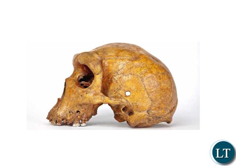 Kabwe Broken Hill Man Skull
