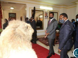 President Edgar Lungu with his Malawian counterpart Dr.Lazarous Chakwera admires a stuffed lion on arrival at State House