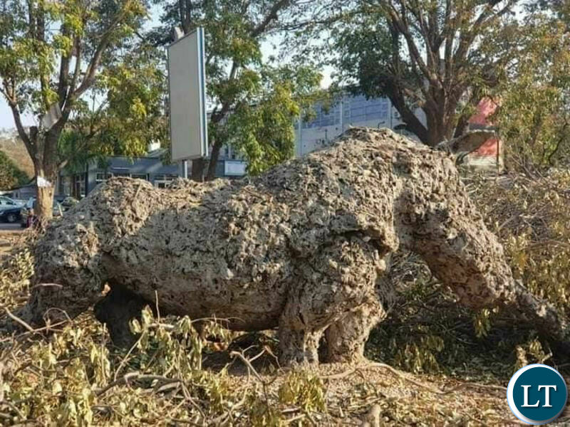 Rhino sculpture which was one of the most significant contemporary environmental art pieces Lusaka had